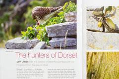Dorset Life magazine