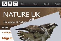BBC Autumnwatch Osprey