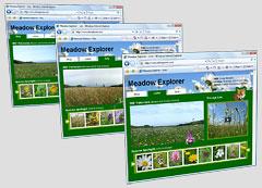 Dorset Meadow 365